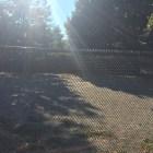 The MSPCA-Angell Dog Park at 350 S. Huntington Avenue in Jamaica Plain.