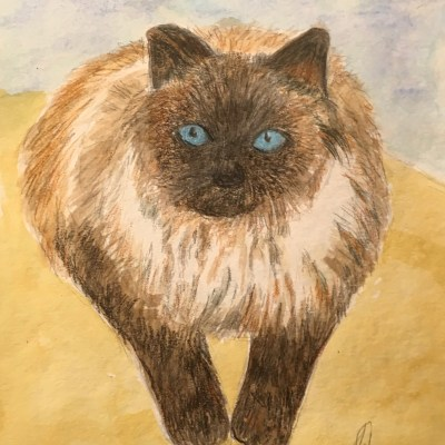 Marley-my cat-watercolor