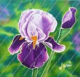 Purple Iris on Silk