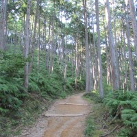 Walk like a pilgrim -- hiking the Kumano Kodo
