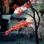 aoyomonoyokocho_09100020-a