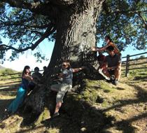 ruta-de-los-arboles-actividades-en-la-naturaleza