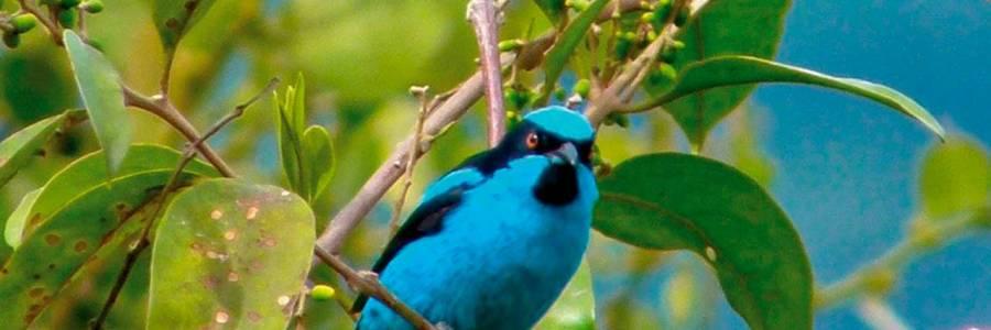 Libro rojo de las aves de Colombia