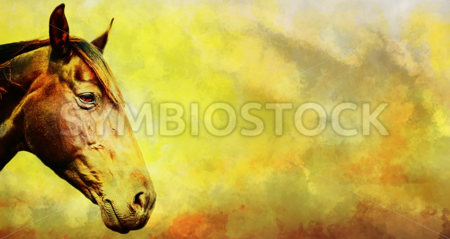 Horse head grunge background - Jan Brons Stock Images