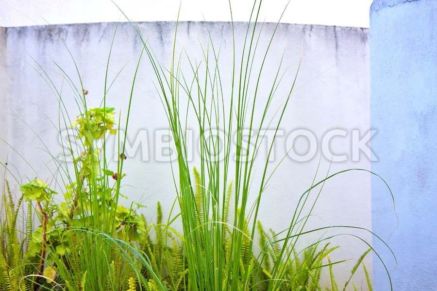 Reed Fern Concrete Walls - Jan Brons Stock Images