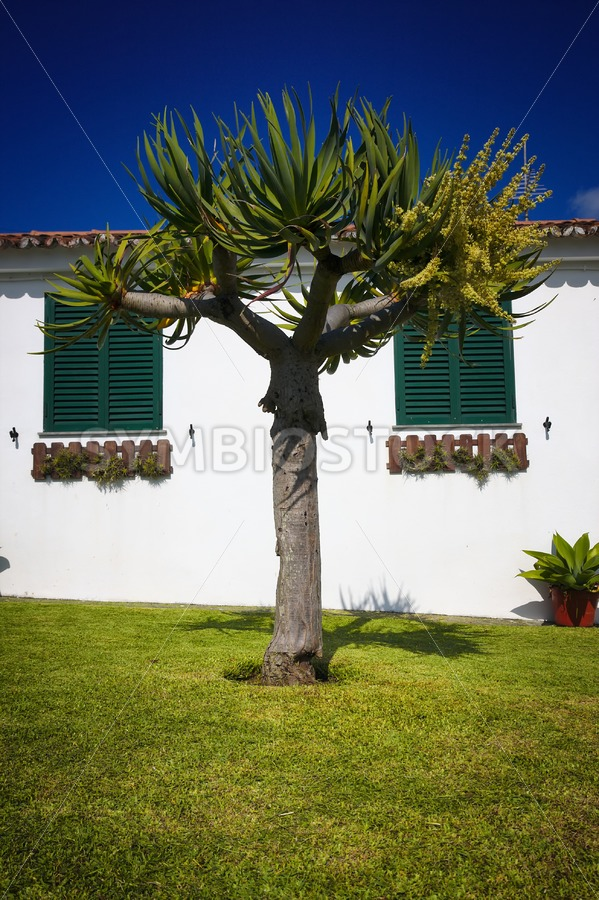 Dragon Tree Garden House - Jan Brons Stock Images