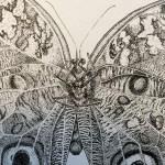 borboleta_02