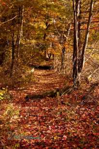 Lynn Birch pond path through fall leaves birch pond saugus ma