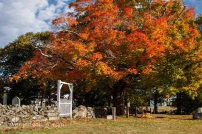 Harpswell cemetery with a huge orange maple giving shade to the souls of residents..