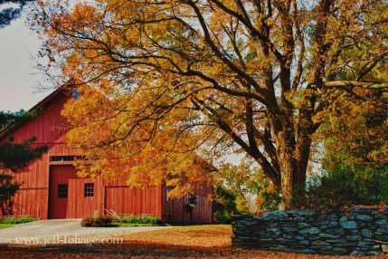 Connecticut farm with a stone wall and fall foliage hanging above the wall and red barn