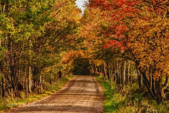 a farmers road in peacham vt with later afternoon sunlight sidelighting the leaves