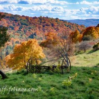 Late July foliage forecast & Comment winner