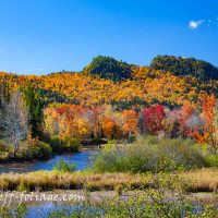 2016 Foliage Update for June