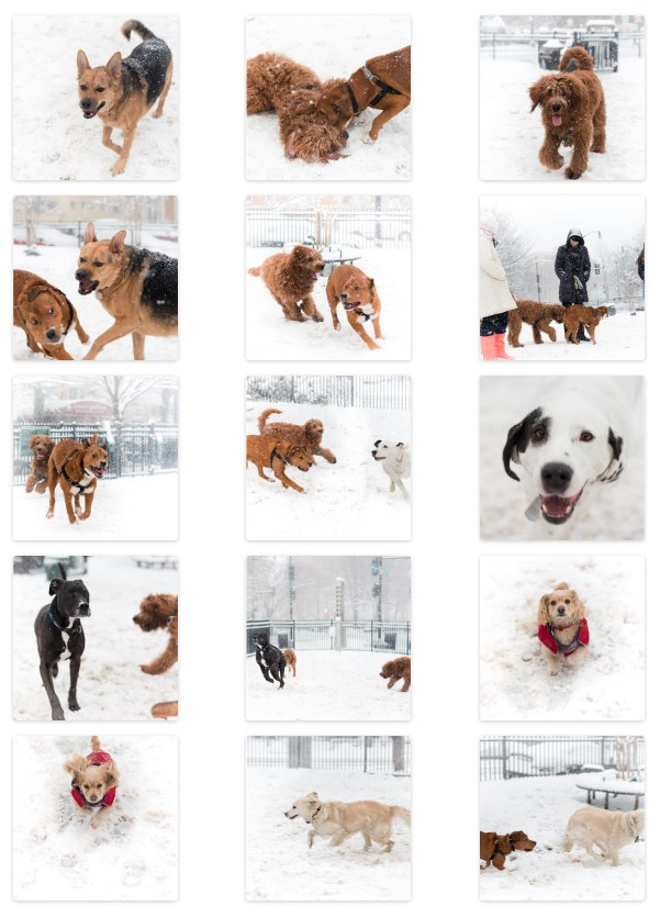 follow the dogs to the park for some snowy fun