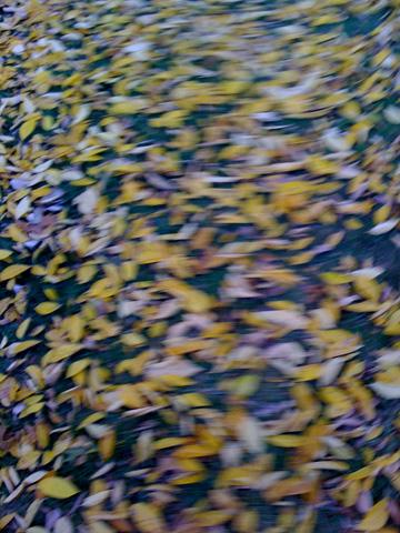 blurredLeaves