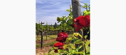Vines & Roses