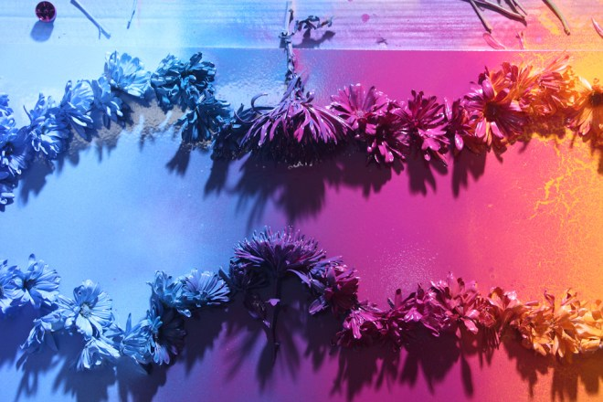Jenna Citrus Art Rainbow Painting IMG_2334