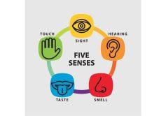 Êtes-vous plus visuel, auditif ou kinesthésique?
