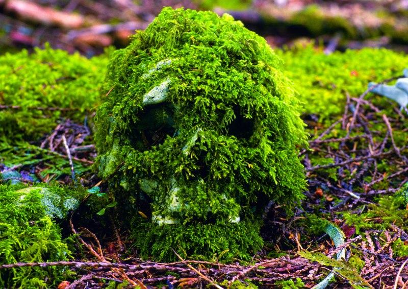 First Nations Moss Covered Skull - Jett Britnell
