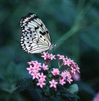 Weisbord-022412-Butterfly