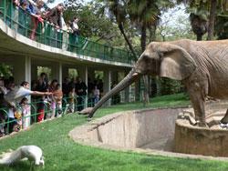 Eller-040612-Elephant