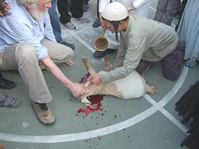 "The slaughtered ""Pascal"" goat's blood was collected in a gold vessel to be sprinkled on a makeshift altar, in the middle of a JCC basketball court."