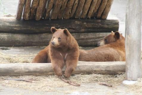 Einhorn-011813-Bears