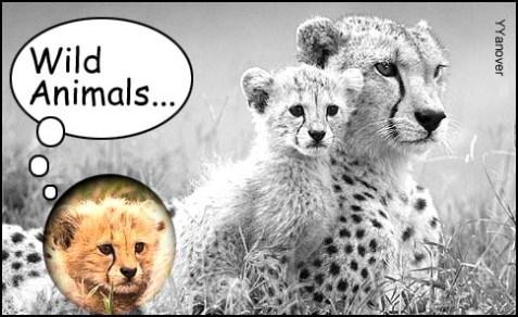 Wild Animals