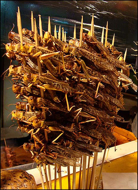 Skewered locusts, ready to eat, in Beijing, China.
