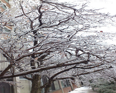 Kupfer-010314-Trees