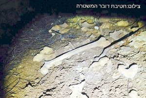 ancient bones discovered Gush Etzion