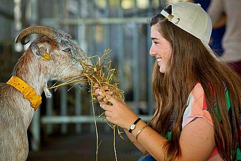 a lucky goat
