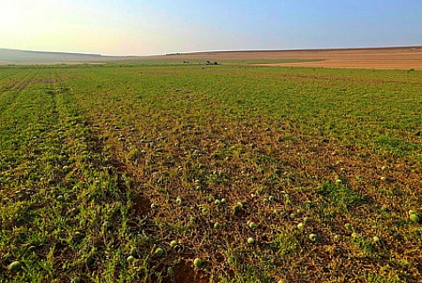 Agricultural field in Israel.