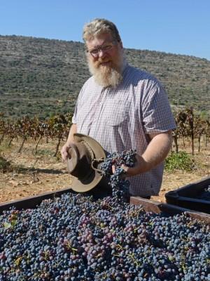 1383326396000-SETTLER-FARMING-GrapeHarvest22