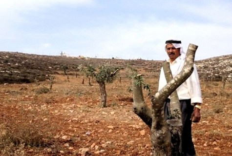 Olive-Arab