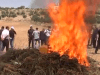 Hebron police burning marijuana