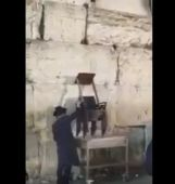 Freeing cat from Kotel