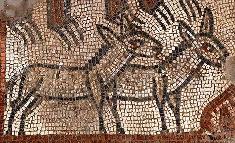 Donkeys in Noah's ark mosaic, Huqoq. / Courtesy