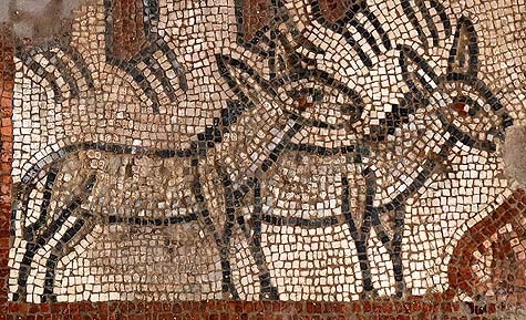 Donkeys in Noah's ark mosaic, Huqoq. / Courtesy