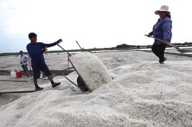 Sea salt harvest