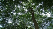 tree-663157_1280