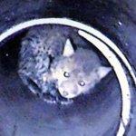 """""""Fuchs, was hast du denn dort verloren…?"""" – Aufwendige Tierrettung der Jenaer Feuerwehr für einen Jungfuchs"""