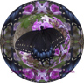butterfly marble mandala