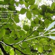 islight2