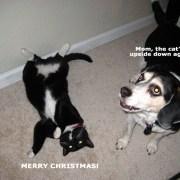 dewey-gracie-christmas