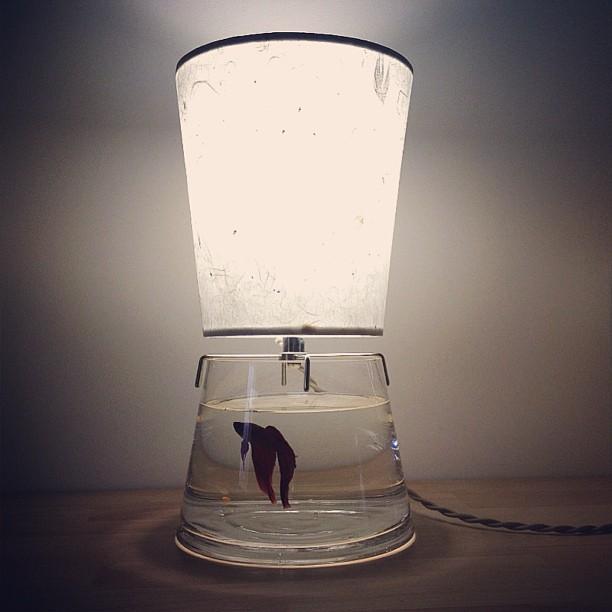 fishtank-lamp