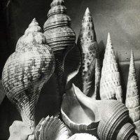 Nautilus. Schnecken, Muscheln und andere Mollusken in der Fotografie
