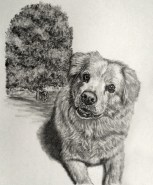 Dog Memorial Portrait Drawing