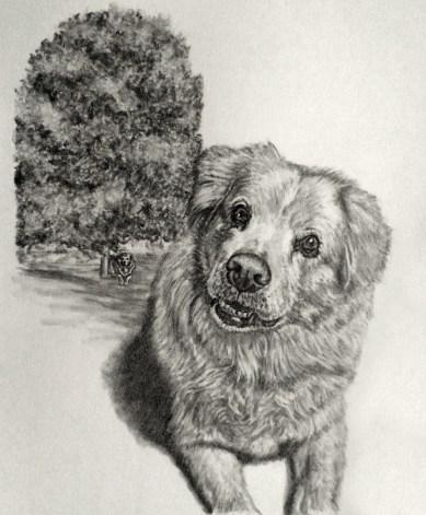 Dog Memorial Portrait Drawing