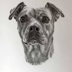Nori-Pet-Dog-Portrait-Drawing-by-John-Gordon